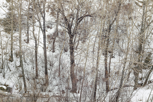 Bowmont Park, Waterfall Valley, Winter Trees