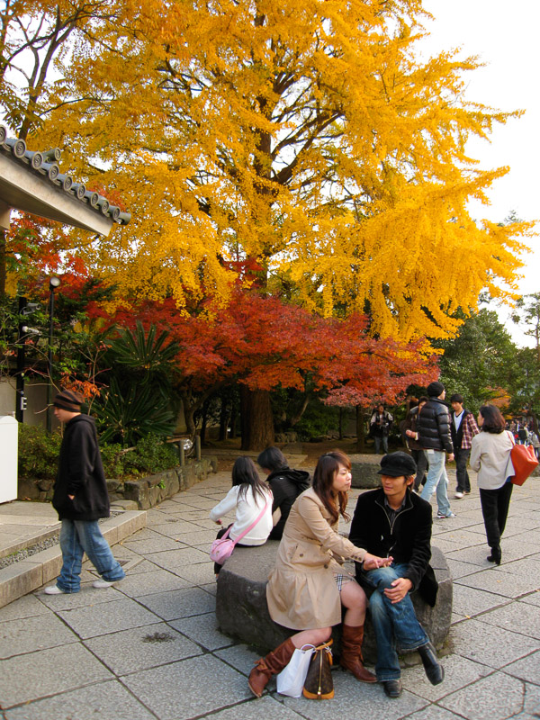Couple and Autumn Foliage, Kōtoku-in Temple, Kamakura, Japan