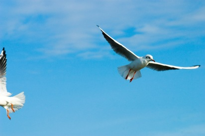 Gulls, Sopot