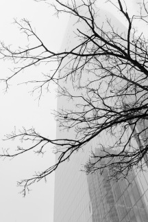Branches and Fog