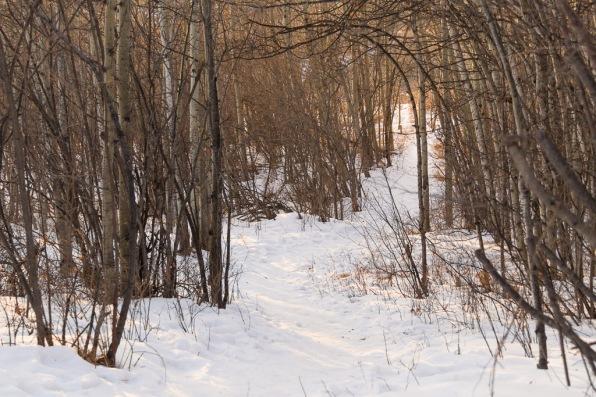 Winter. Forest. Light.