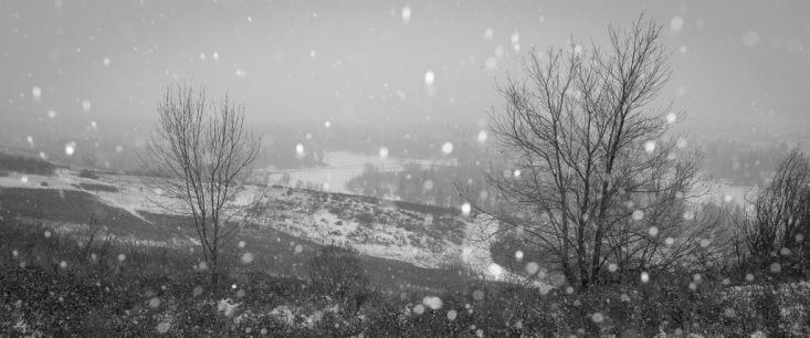 Bowmont Park Snowstorm 1