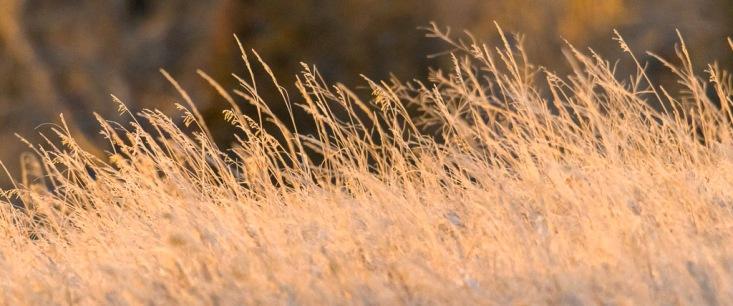 Prarie Grassland