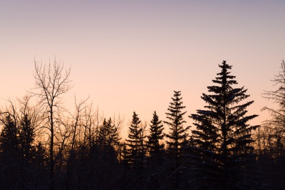 Bow River Sunset Tree Silhouettes 1