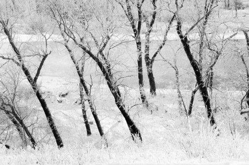 Riparian Trees 3
